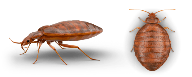Absolute Termite Pest Control Hawaii Llc Prep For Bed Bugs